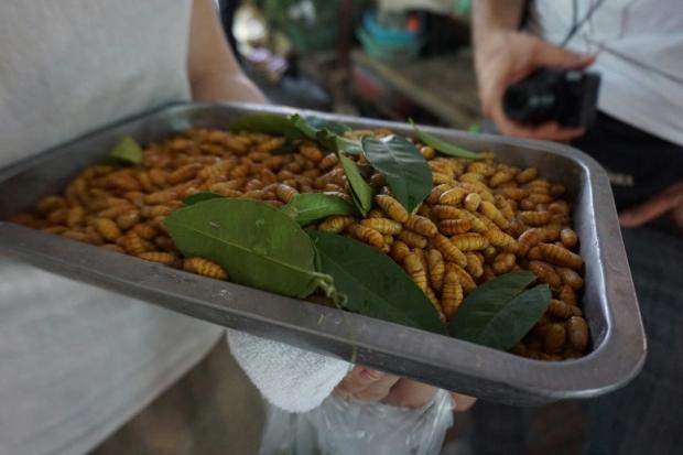 Frische Mehlwürmer am Markt in Hanoi